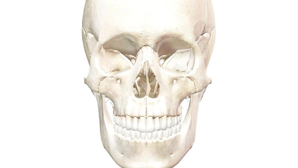 top_craniosacral